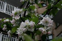 Forår i min baggård