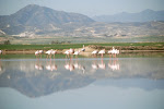 Flamingo's: Salt Lake