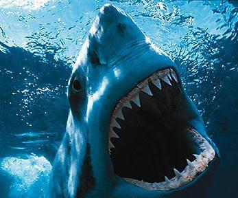 Q Significa Shark Lugares increibles en ...
