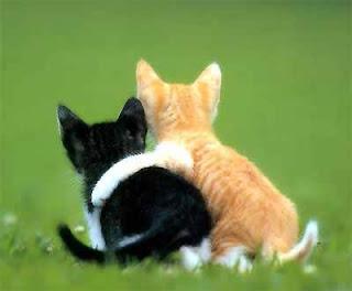 kucing cewek dan cowok pacaran
