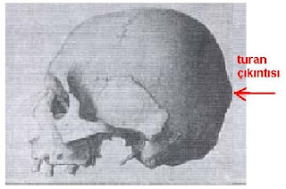 Human Skull Bumps http://anthrocivitas.net/forum/showthread.php?t=10558