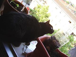 Uki, pensando en cazar palomas al vuelo