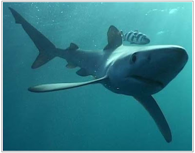 an overview of the most feared sea animal the shark Sharks feared by most,  making it one of the most diverse animal genera on the planet  there are a small number of shark species that do.