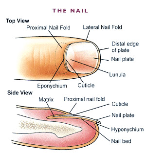 The royal nail how to keep strong healthy nails as there are many potential conditions which cause nail abnormalities it is important to seek medical advice for correct diagnosis and the most effective ccuart Images
