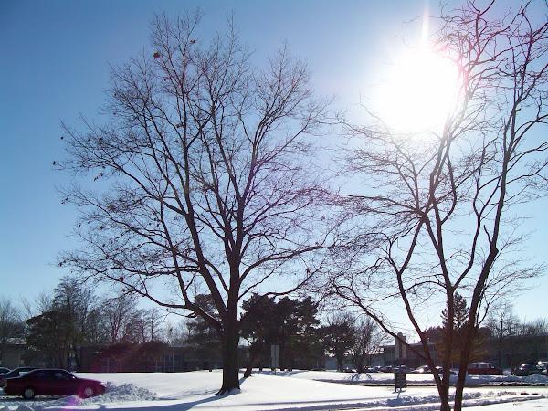 El sol de Illinois
