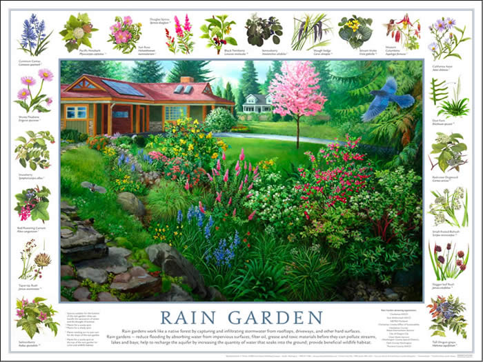 Wayne County Master Gardeners: RAIN GARDEN WORKSHOP....