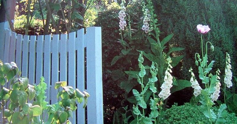 Sous le figuier jardin imaginaire jardin secret for Le jardin imaginaire