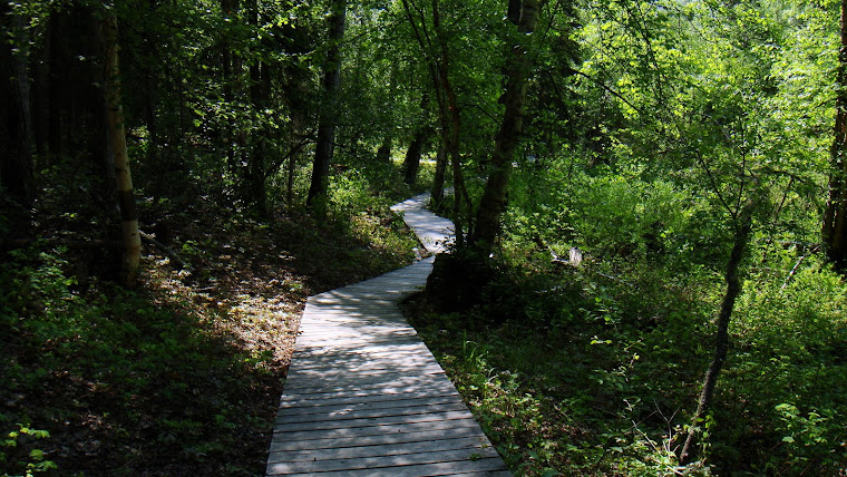 Path Leading Up to the Liard Hot Springs