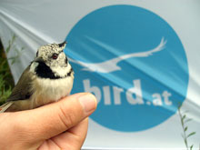 Bird.at - Austria's premier bird website