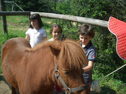 hay que aprender cuidar y querer a un caballo