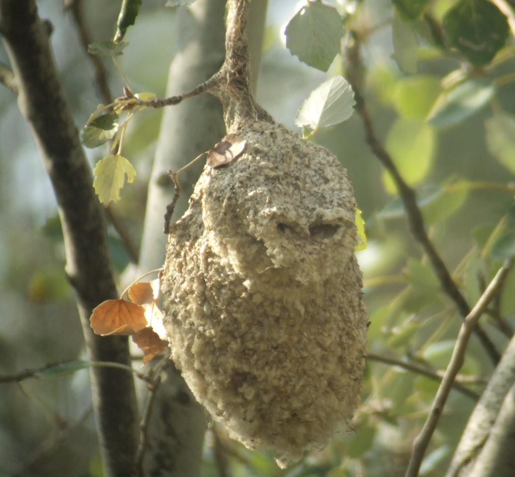 nido de aves