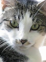 Cat Info.org