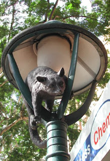 Adelaide Street Animal Sculpture - Possum
