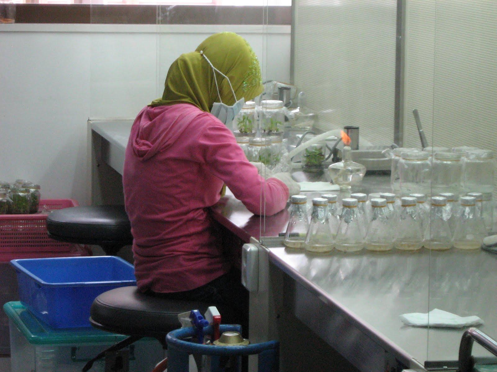 plasma nutfah konservasi tumbuhan langka dan Koleksi plasma nutfah diperlukan untuk memudahkan pengujian  tidak kurang  dari 28 ribu jenis tumbuhan, 350 ribu jenis binatang, dan 10.