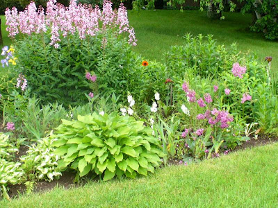 Seasonal annuals and perennials delight