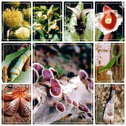 flora+fauna.jpg