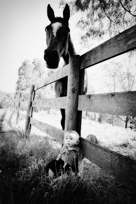 baby and a horse
