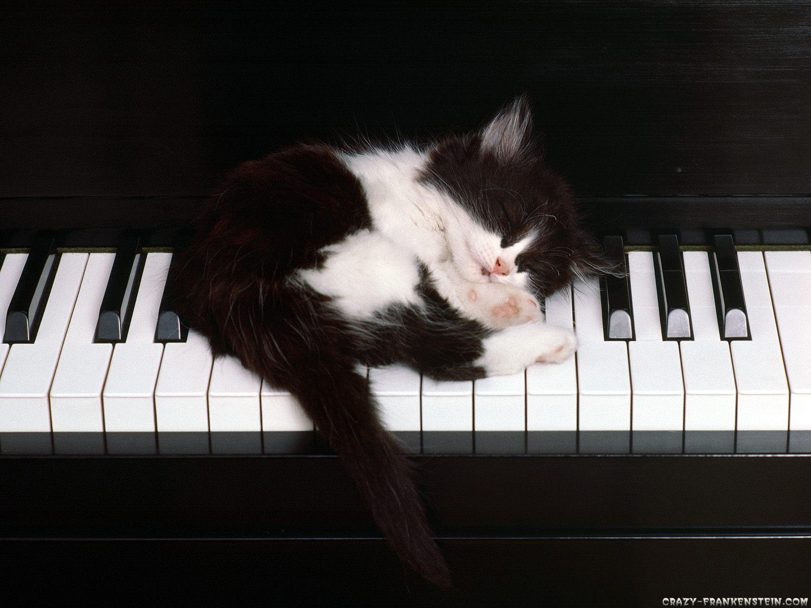 http://2.bp.blogspot.com/_gPfr_t87hWk/TFATC4dUsMI/AAAAAAAAA5o/bTE06n-EtrE/s1600/black-white-cat-wallpaper-1600x1200.jpg