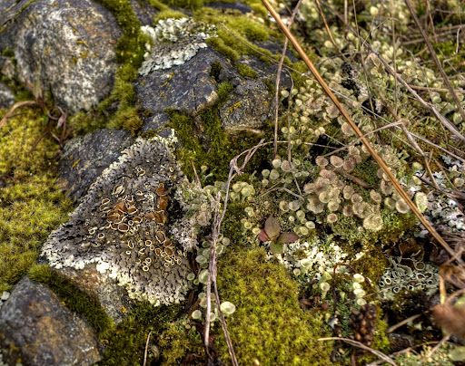 Victoria Daily Photo: Lichens, Mosses and Succulents