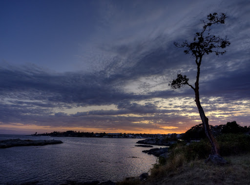 sunset, arbutus, Westsong Walkway, Victoria, BC, Canada