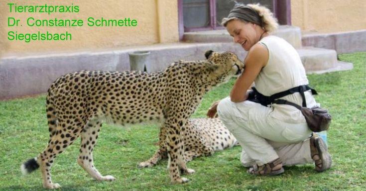 Tierarztpraxis Dr. Constanze Schmette