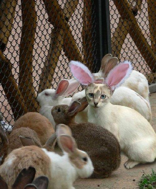 [Gatinho+fantasiado+de+coelho+no+meio+de+coelhos..htm]