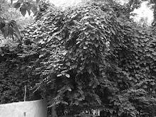 """Selva de hojas"""
