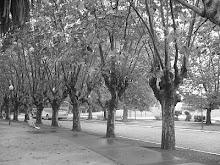 Paisaje de árboles