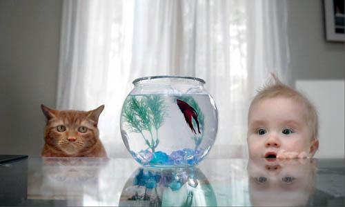 [cat-fish-baby.jpg]