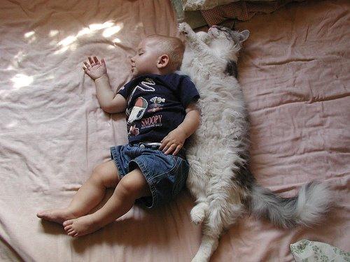 [cats.jpg]