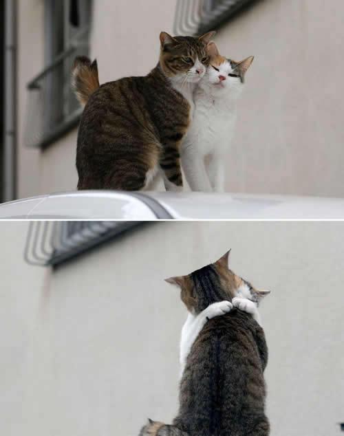 [love_cats.jpg]