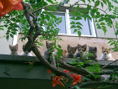 ��� ��� ���� ��� ���  2012 kittens.jpg