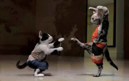 Funny Kung Fu Cats