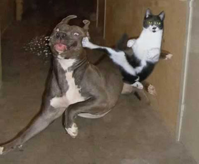 ninja cat