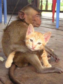 http://2.bp.blogspot.com/_gTJMEP-c2fo/STk-8W8B9MI/AAAAAAAAIcI/6bZrDxlFoqw/s400/cat+and+monkey+pic+2.JPG