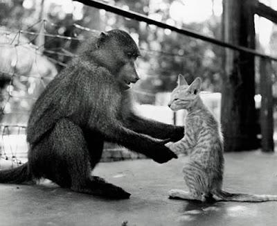 http://2.bp.blogspot.com/_gTJMEP-c2fo/STk_IdBl6hI/AAAAAAAAIcw/B1h_CYcXVt0/s400/cat+and+monkey+pic+7.jpg