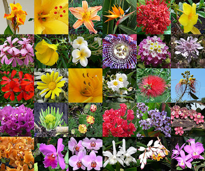 Su amor por las flores y