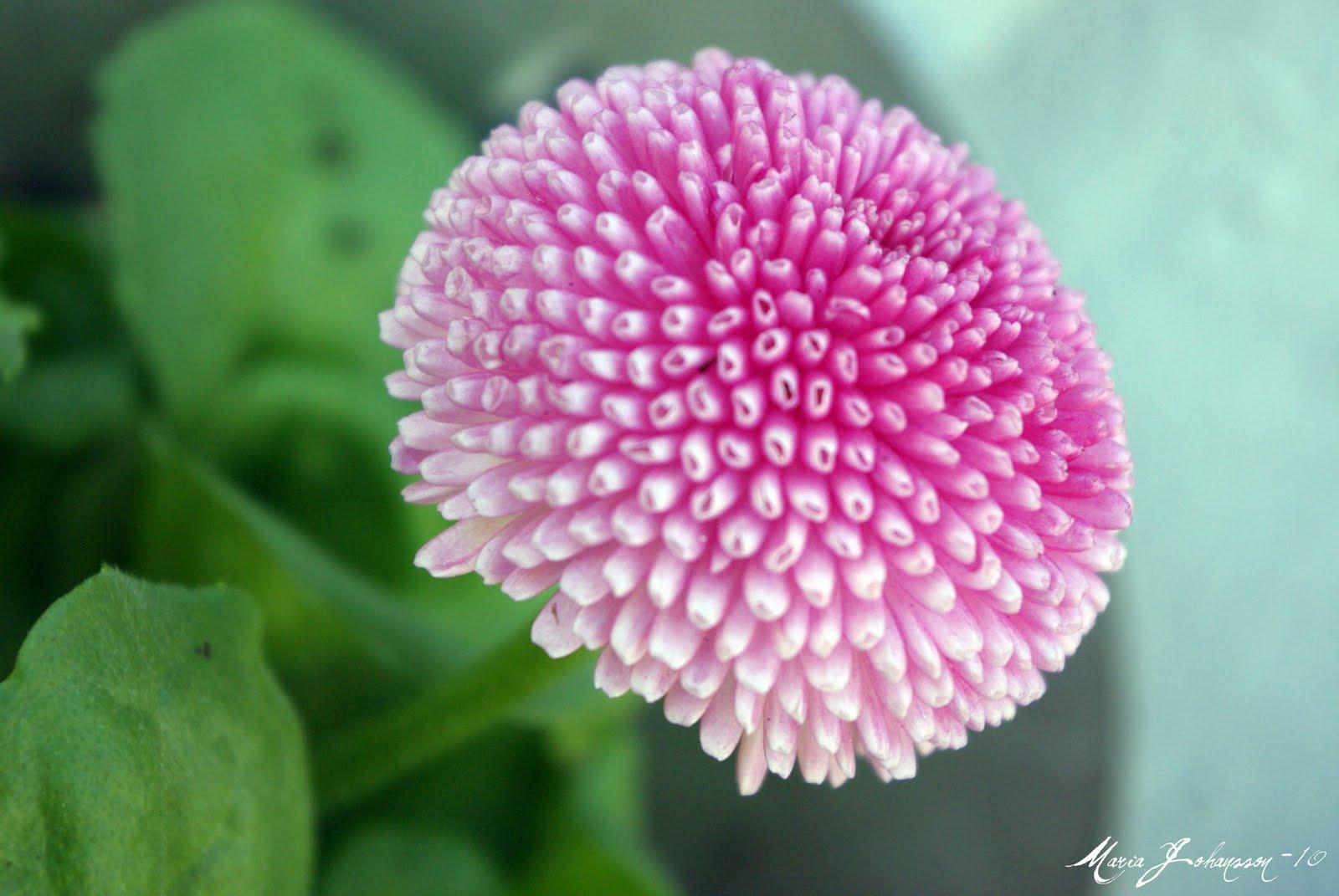 vackra blommor namn