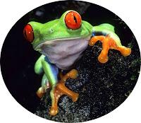 cloisonne frog
