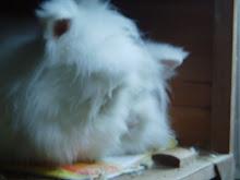 My bunnies...RIP Harvey xx