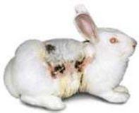 Les Tests sur les animaux sont inhumains et inutiles