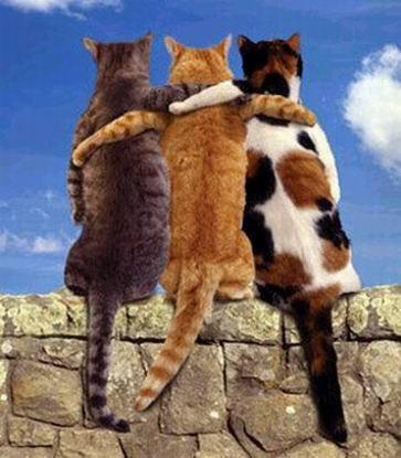 Madah Persahabatan