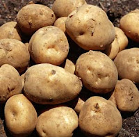 Budidaya Kentang dengan pupuk organik Nasa meningkatkan hasil panen kentang.