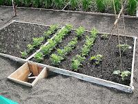 pupuk organik nasa mampu menumbuhkan tanaman dgn normal di lahan pasir