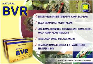 BVR masuk melalui mulut serangga hama, kemudian tumbuh dan berkembang menghancurkan sistem organ dari dalam.