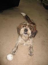 Morris the dog