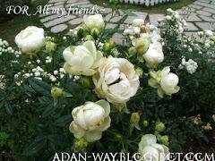 From Adan