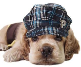 http://2.bp.blogspot.com/_gfA2nEHMMDc/Rz0K4lTklbI/AAAAAAAAAT8/yOB8Cai5D4A/s320/sad-dog.jpg