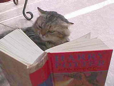 http://2.bp.blogspot.com/_gfXupHOEhH0/ShBfUUq6_kI/AAAAAAAAE-o/hGIdBtn4LbA/s400/cat+reading+harry+potter.jpg
