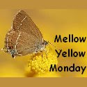 Mello Yellow Monday